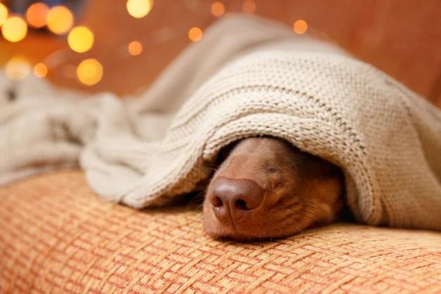 Cachorro sente frio?