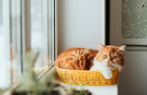 Gato deitado em cesto