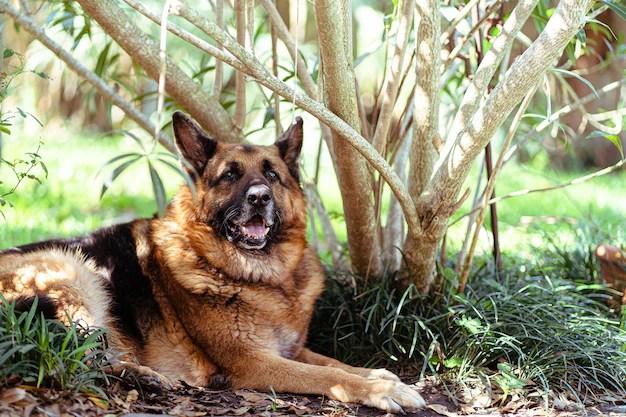 Cães de ajuda social