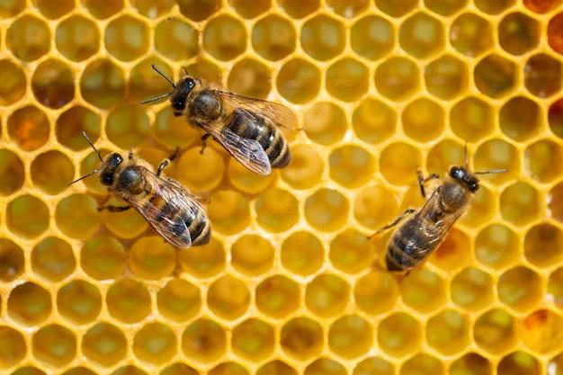 arı kolonisi, koloni, sosyal davranışlar, toplum, toplum nedir, birey ve toplum, doğada yaşam, sosyal bilgiler, hayat bilgisi, ilkokul, meraklı turşu, meraklitursu.com,