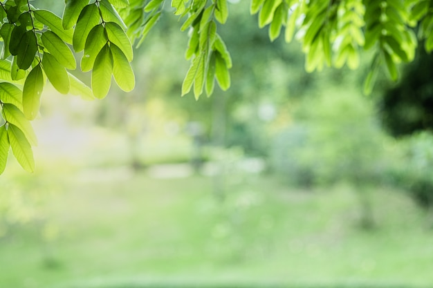 Green Garden Background Images Free Vectors Stock Photos Psd
