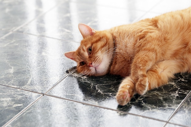Cute cat on the floor Free Photo