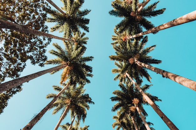 Low angle view of palm trees under the sunlight ad a blue sky in rio de janeiro Free Photo
