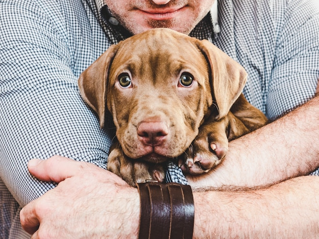 Man hugging a young, charming puppy. close-up Premium Photo