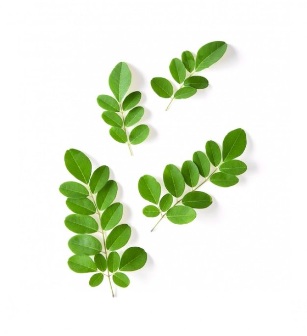 Learn how to use Moringa leaves