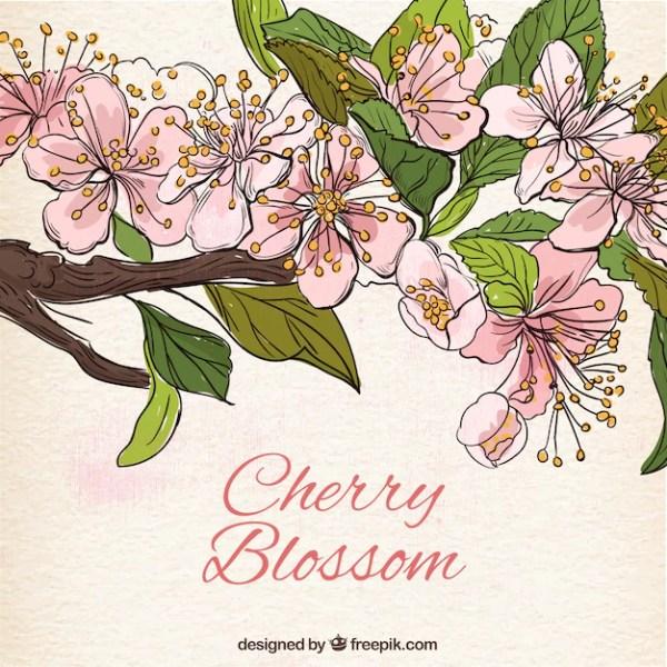 Рисованный фон из цветущей вишни Вектор Скачать