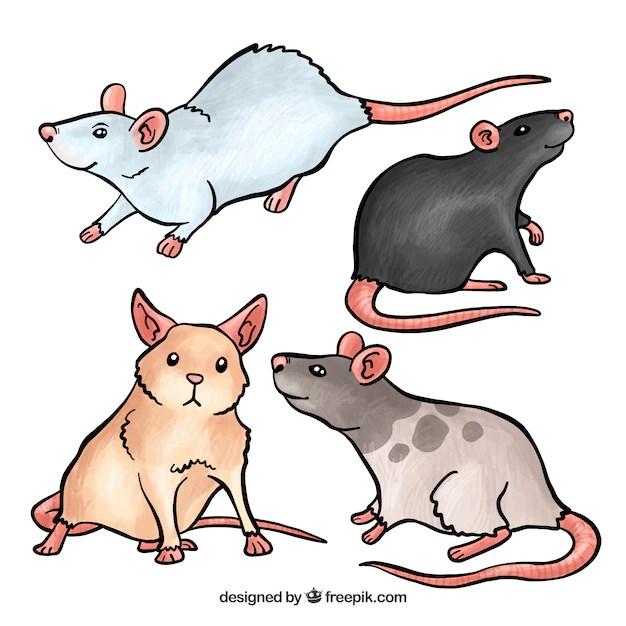 Free Vector | Cute mice set