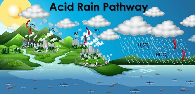 Diagram showing acid rain pathway | Free Vector