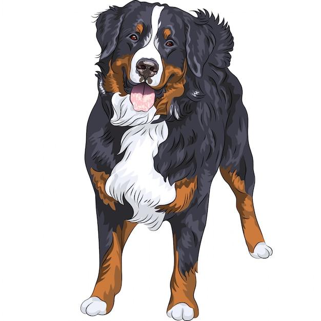 Dog breed bernese mountain dog standing and smiling Premium Vector