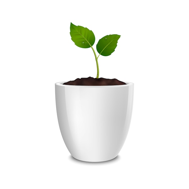 Premium Vector Growth Concept Template Of Realistic Icon Of The Sprout In A White Flower Pot Isolated On White Background