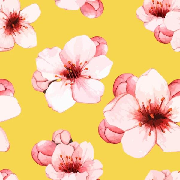Рисованной цветок цветущей вишни Вектор Скачать