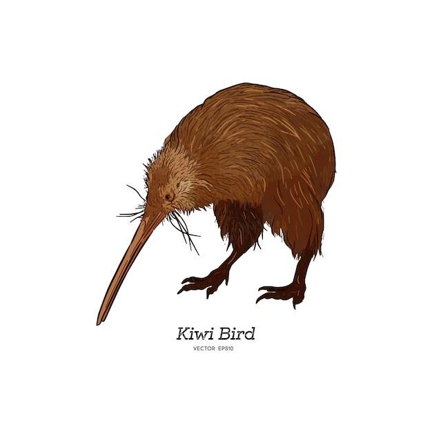 Premium Vector North Island Brown Kiwi Bird Illustration