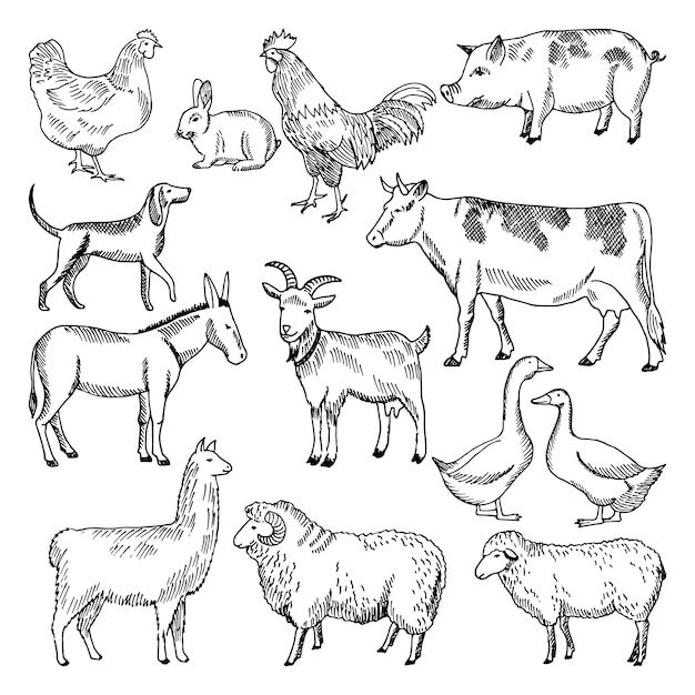 Premium Vector Vintage Farm Animals Farming Illustration In Hand Drawn Style Animal Farming Sketch Drawing Chicke