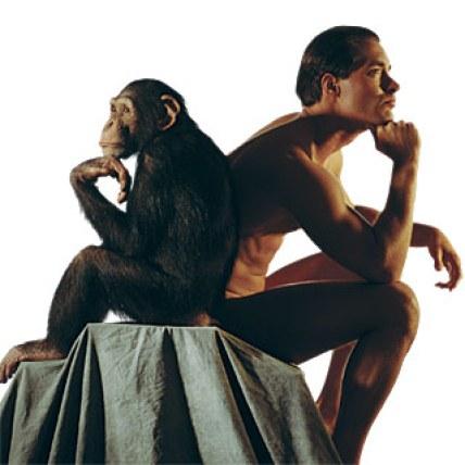 Simpanse dan Manusia. 1 % yang menghasilkan perbedaan. Gambar dari ScientificAmerican