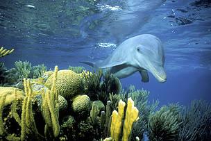Se necesita un cambio en las pesquerías para dar una oportunidad a los delfines, ballenas y marsopas