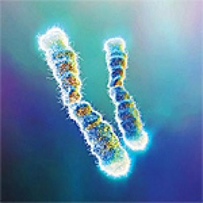 Telomerase diujung DNA, menjaga kesatuan DNA