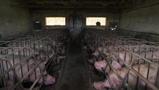 Colectivos ecologistas, agrarios, ganaderos y plataformas vecinales reivindican la ganadería familiar frente a la proliferación de las macrogranjas