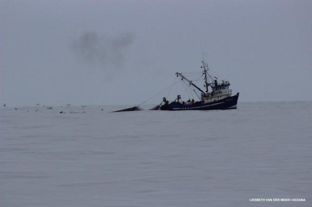 Operación global contra la contaminación marina detecta más de 500 delitos