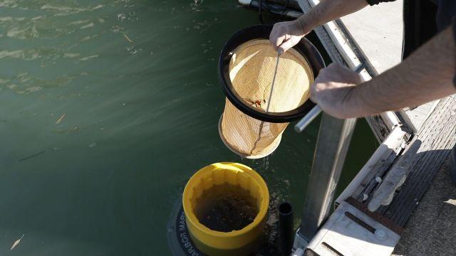 Dos jóvenes crean un dispositivo que se instalará en dos puertos españoles y recoge una tonelada y media de residuos al año
