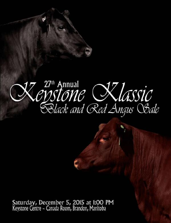Keystone Klassic Black and Red Angus Sale by Today's ...