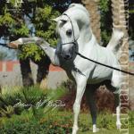 Arabian Horse Times Vol46 No12 Issue 5 By Arabian Horse Times Issuu