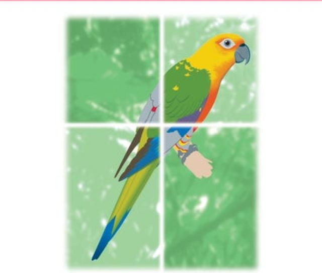 Cites Identification Guide Birds Guide Didentification Cites Oiseaux Guia De Identificacion De Cites Aves