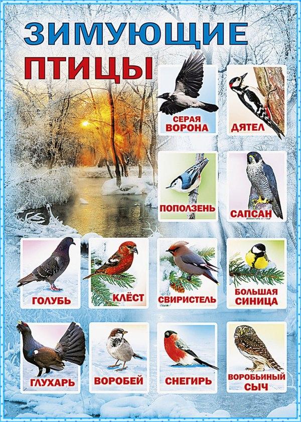 Зимующие птицы - Детский сайт ПЧЁЛКА.