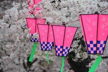 Hanno cherry blossom festival