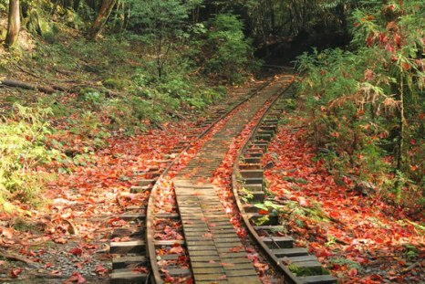 「屋久島 紅葉」の画像検索結果