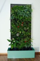 Pflanzen Der Wand Selber Machen