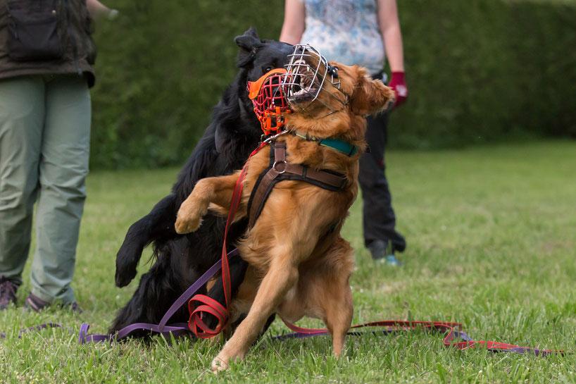 Mag Meet And Greet So Denkt Ihr Hund Mit Webseite
