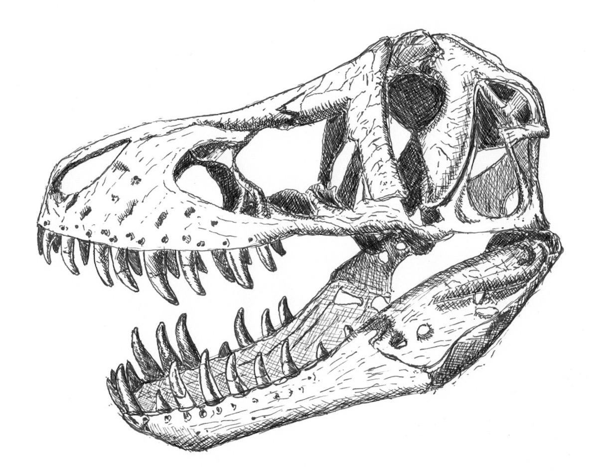 So War Tyrannosaurus Rex Wirklich