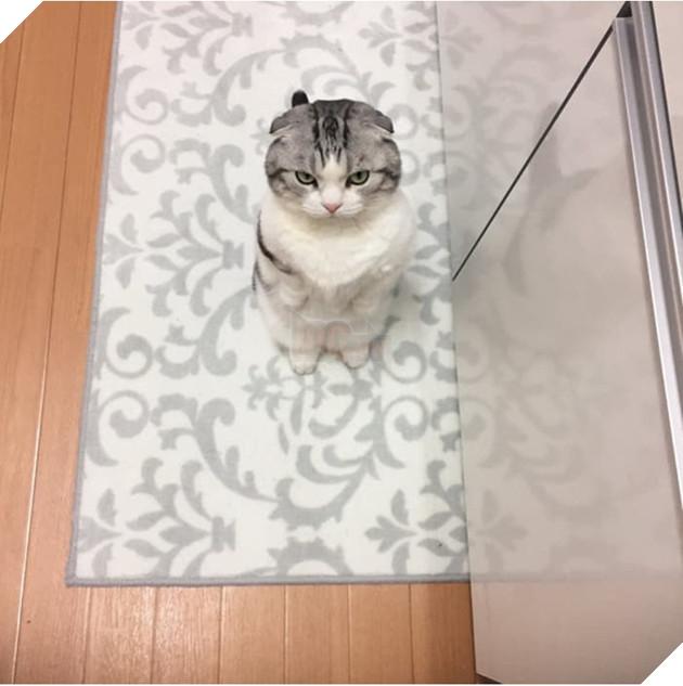 Biểu cảm 'dỗi cả thế giới' của chú mèo khi đòi chủ nhân ôm nhưng không được 4