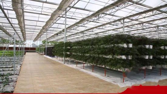vendre multispan serre verre agricole