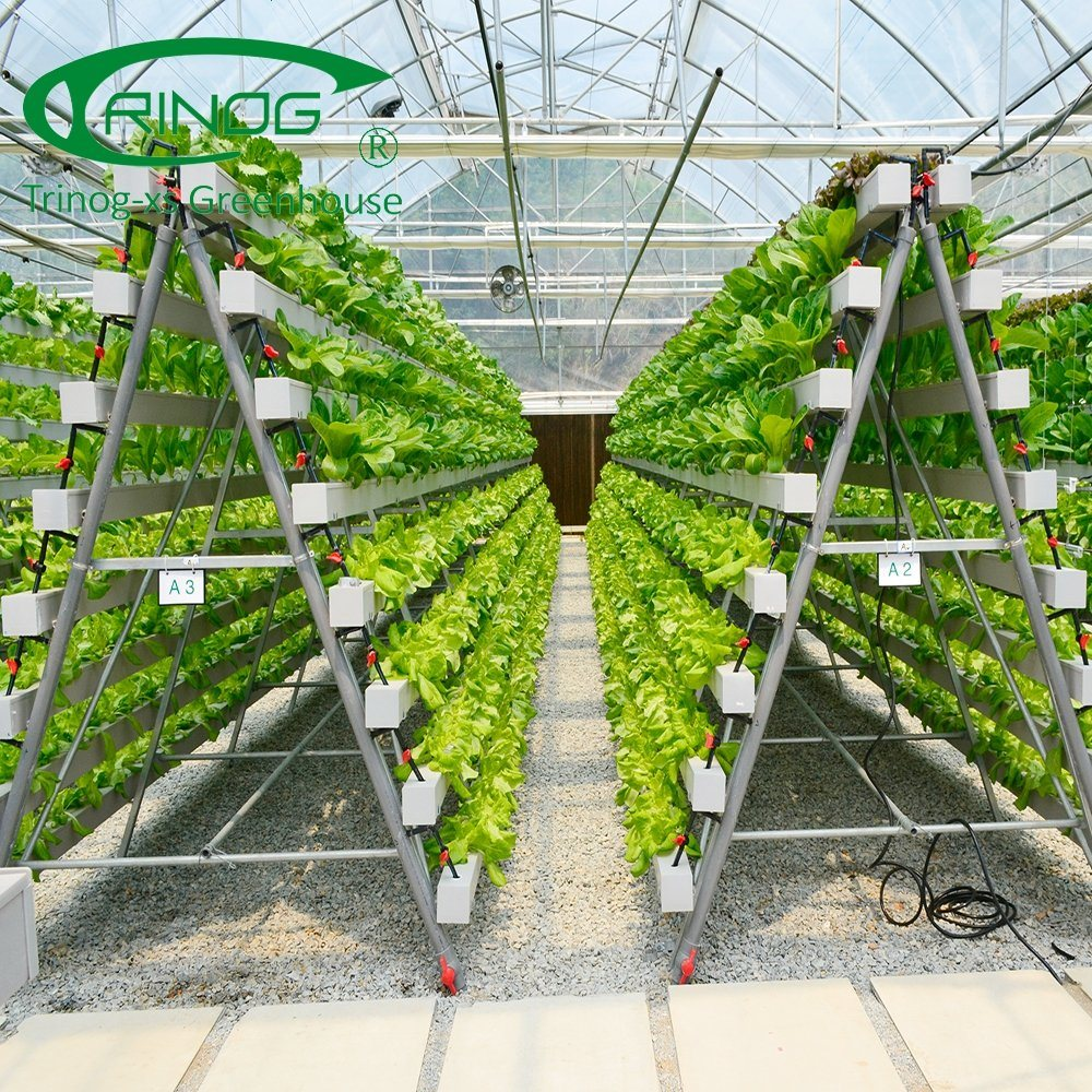 advanced commercial vertical hydroponics system growing Commercial Hydroponic Systems Design id=25243
