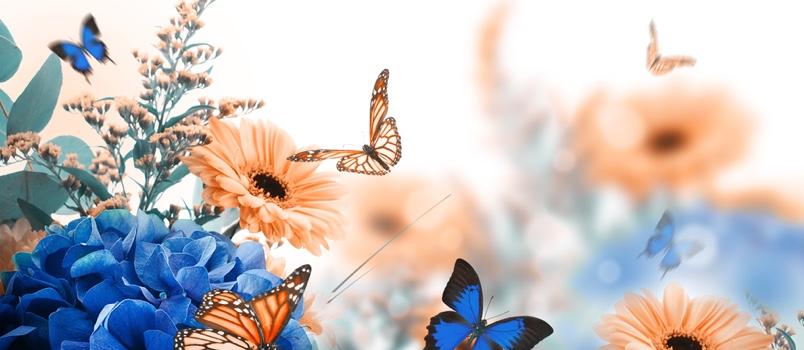 Release butterflies