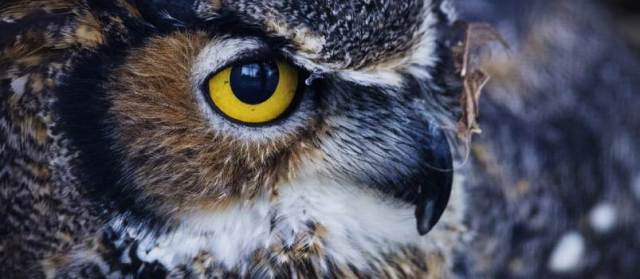 The Owl believes in the fruit of hard work