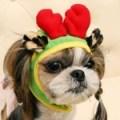 Its Dog(イッツドッグ) コスプレ帽子/ルドルフ【M】