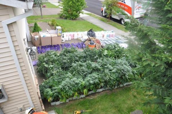 Gresham home is one big marijuana greenhouse | OregonLive.com