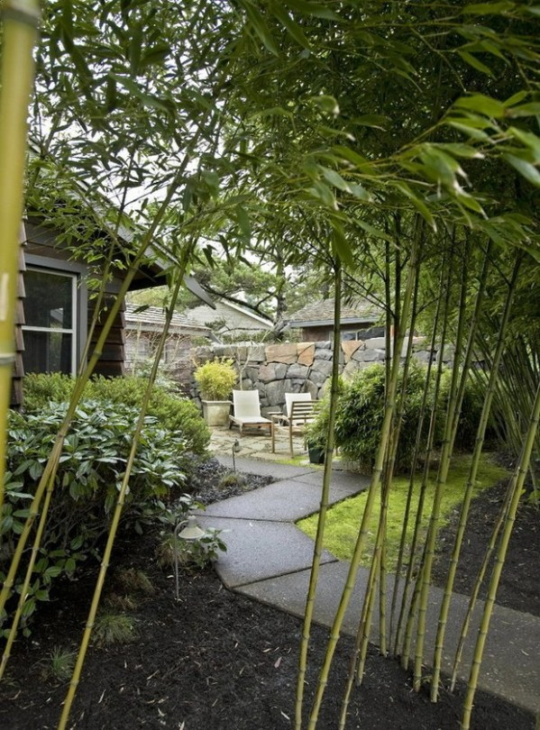 How to capture a tropical feel with plants hardy to the ...