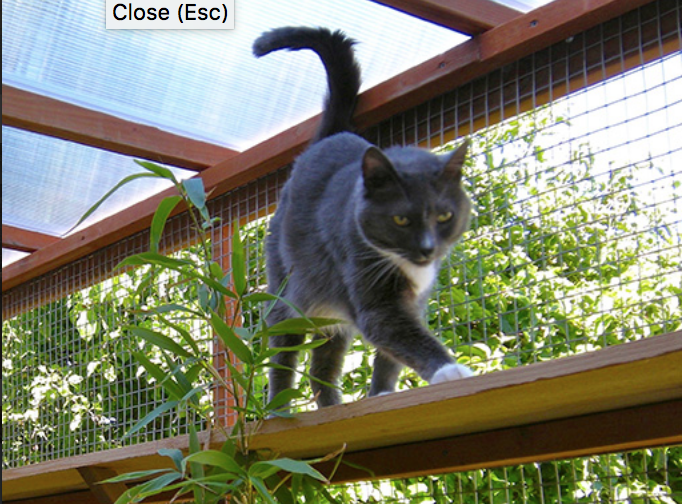 pounce on these diy cat patio plans