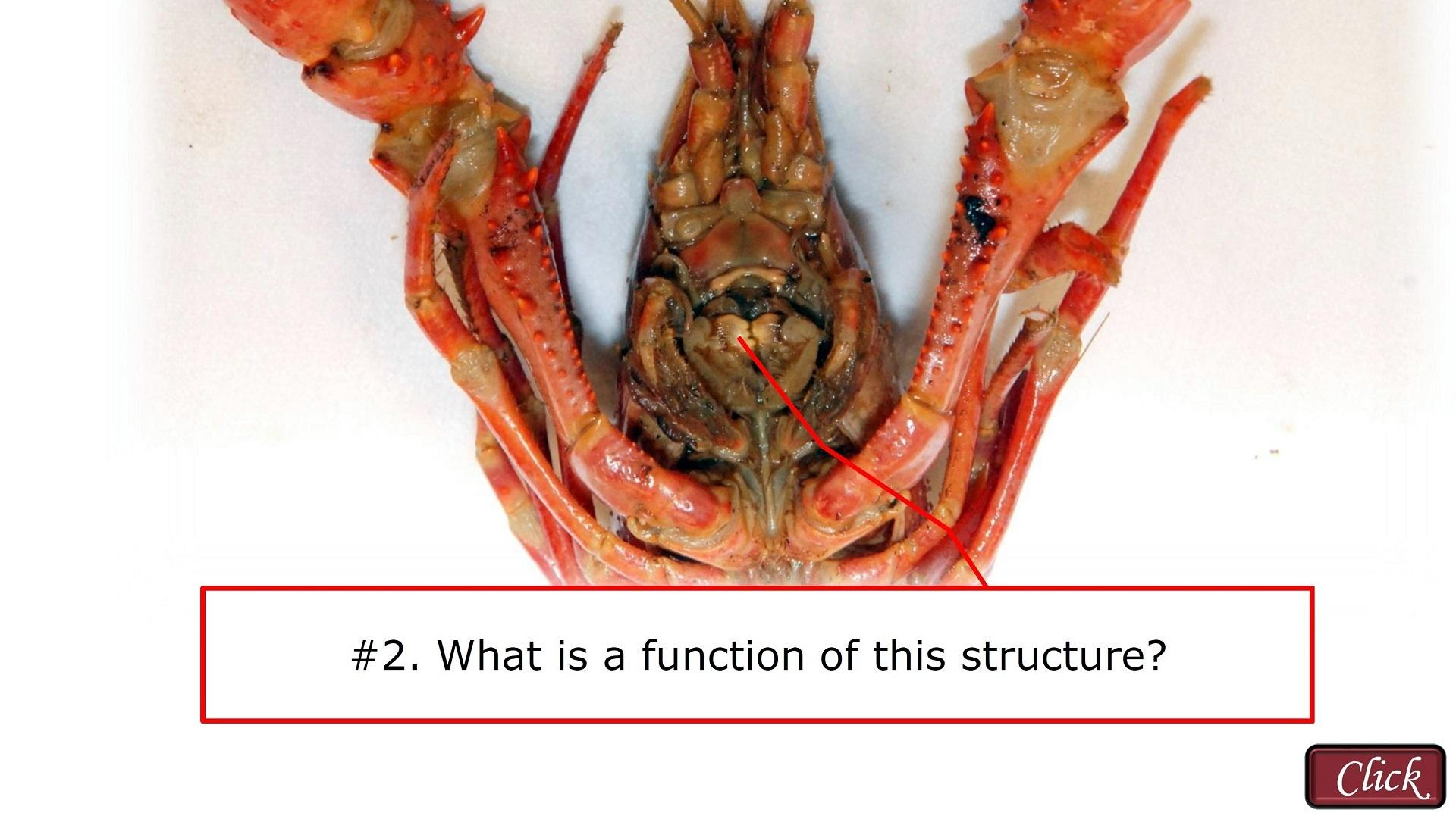 Bestseller Crayfish Observation And Dissection Answer Key