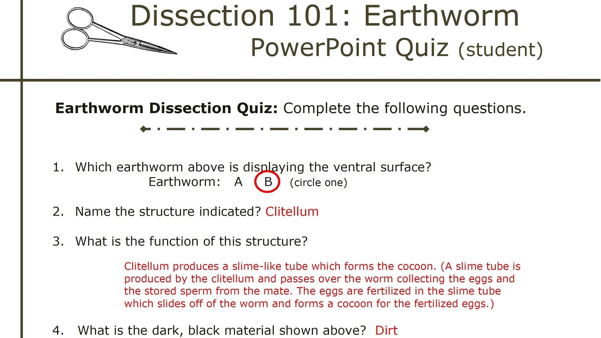 Virtual Earthworm Dissection Worksheet Answers
