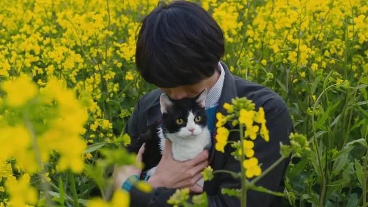2018 兩部必看貓咪電影!「鮮肉與萌貓」的黃金組合,南 ...