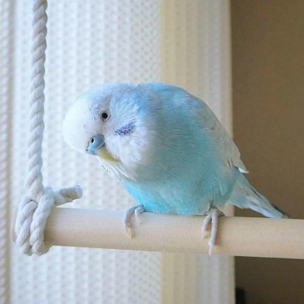 這隻看上去感覺彷如嚐到一口冰沙般清涼透心的小鳥名為Sora,居住在日本的大阪,現年7歲
