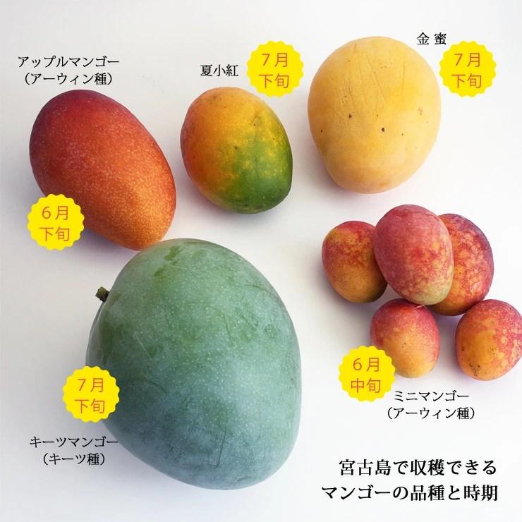 385store: 從濟慈芒果沖繩生產宮古島直接運送!! 原產地沖繩縣宮古島生產芒果1.5kg(2硬幣) | 日本樂天市場