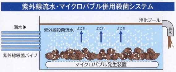 「マイクロバブル 牡蠣」の画像検索結果