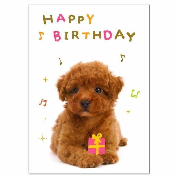 Happy Wishes Birthday Dog