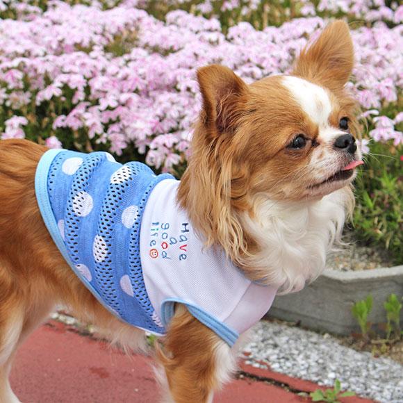 【ドッグウェア】ひんやり クールウェア 犬の服 iDog!爽やかな色合いの水玉柄タンクトップ★