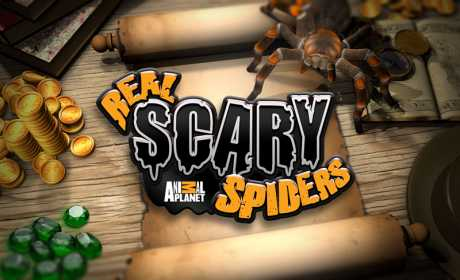 Real Scary Spiders